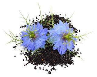 лечебные свойства черного тмина